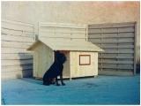 Produse din lemn pentru amenajari exterioare - cusca pentru caine 4